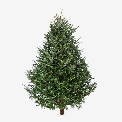 Bäcker's Weihnachtsbäume